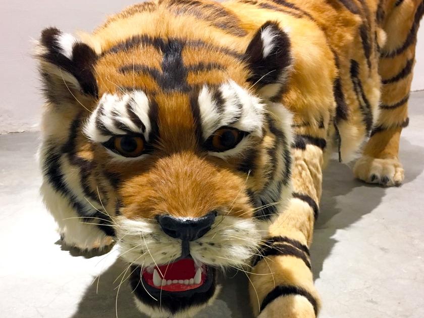 AW tiger image_edited (1)