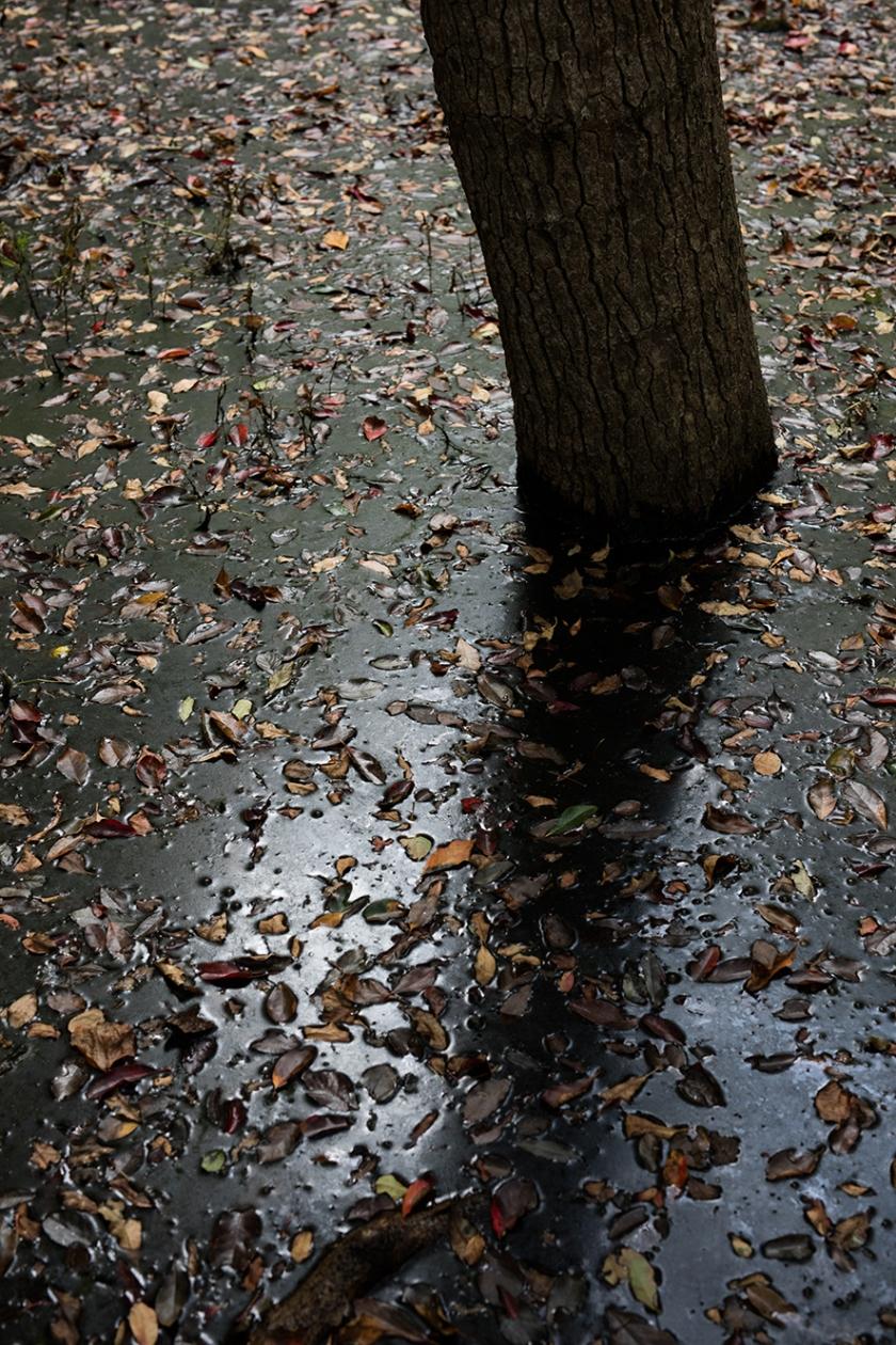 Sunken Forest_A4